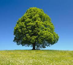 Sondage arbre de la cour